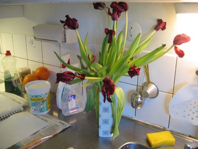 Tulips on the zink