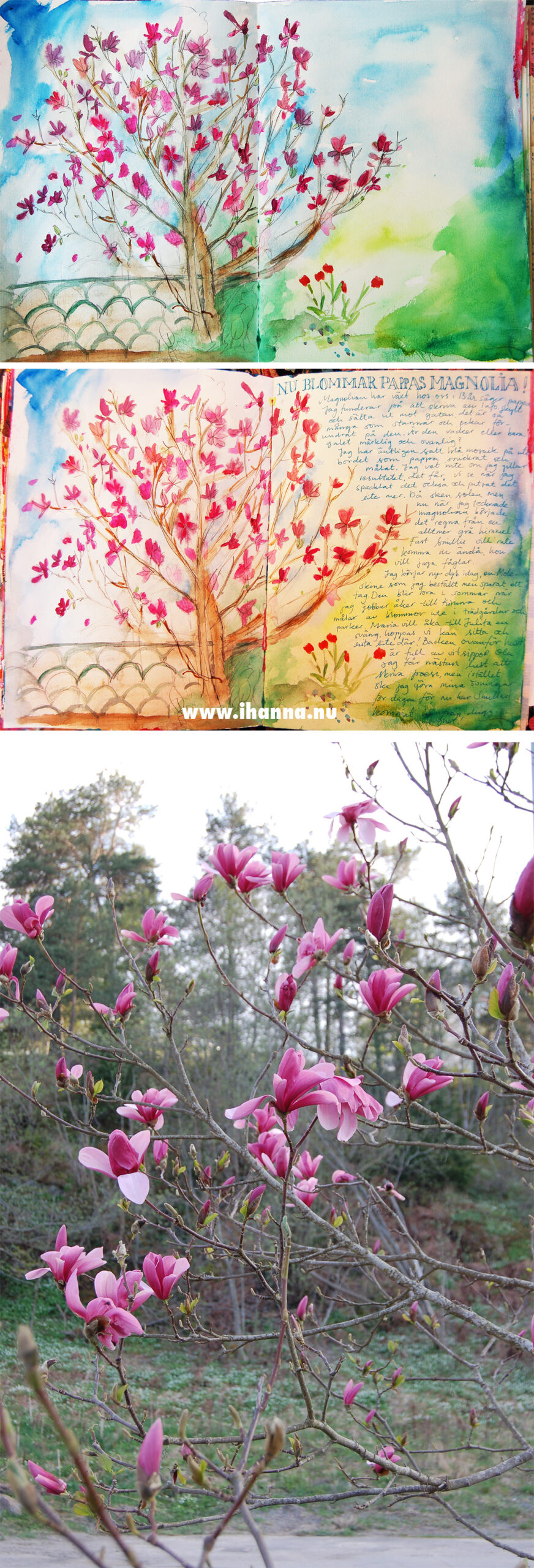 Painting the magnolia tree in my Art Journal - copyright Hanna Andersson
