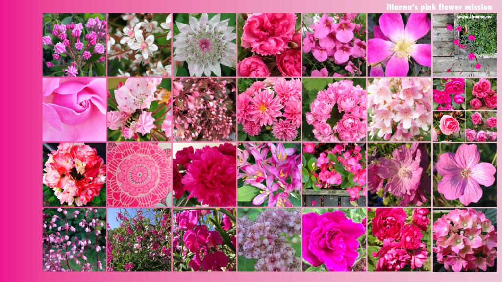 Free Desktop background featuring iHanna's Pink Flower Mission 2014, as seen on instagram (50 Shades of Pink in The Pink Flowers indeed)