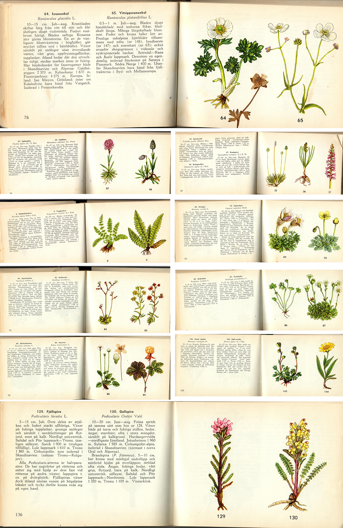 Swedish Alpine Flora (high res scanned images vintage illustrations to download and print)