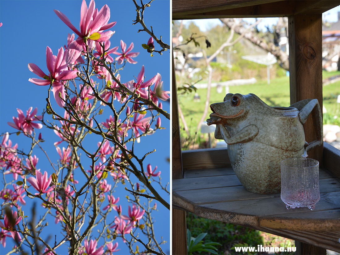 Magnolia tree and frog pitcher